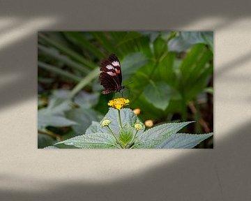 Schmetterling auf Blume von Michel Groen