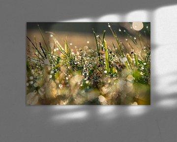 ochtend dauw in het gras