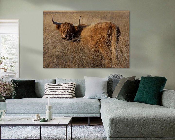 Sfeerimpressie: Schotse hooglander van Jeannette Braamskamp