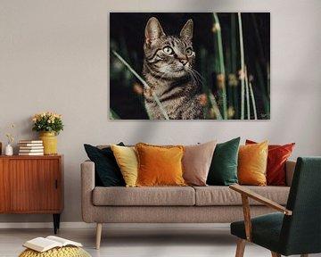 Der Tiger eines Kätzchens von Julie Roothooft