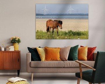 Loslopend paard ( wildlife ) van Anjella Buckens
