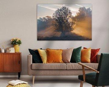Gloeiende boom van Jayzon Photo