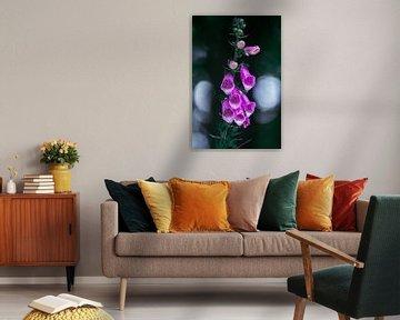 Poppendes Violett von Jayzon Photo
