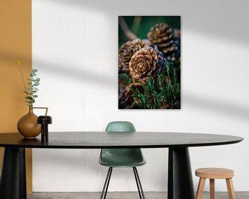 Kiefernzapfen im Herbst von Jayzon Photo