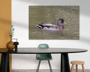 Prachtvolle Ente von Anjella Buckens