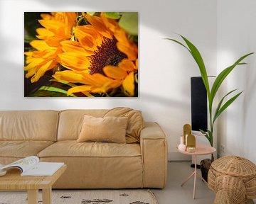 Sonnenblume von Rob Boon
