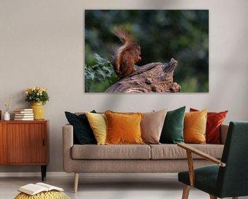 Eichhörnchen schön beleuchtet von Anjella Buckens