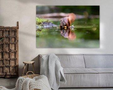 Eichhörnchen mit Reflexion von Anjella Buckens