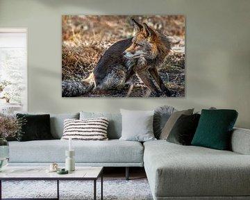 Portrait d'un renard vigilant sur Harrie Muis