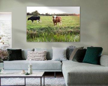 Curieuse vache hollandaise brune sur Wouter van den Broek