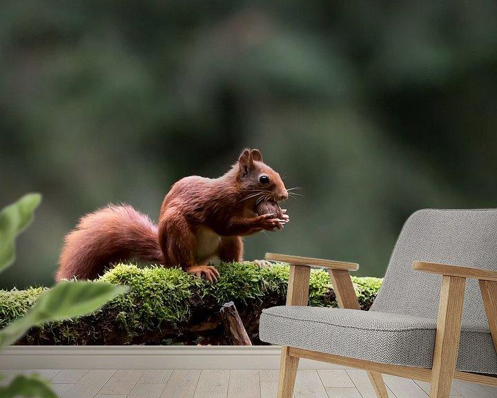 Beispiel fototapete: Eichhörnchen mit Nussbaum von Anjella Buckens