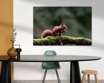 Eichhörnchen mit Nussbaum von Anjella Buckens