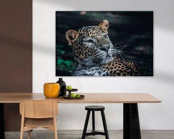 Sri Lanka-Panther von Jayzon Photo