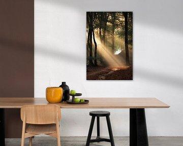 Zonnestralen in het bos van Paul Begijn