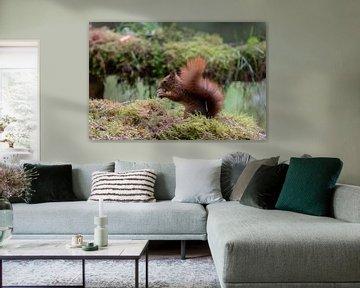 Fressendes Eichhörnchen von Anjella Buckens