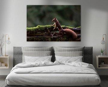 Neugieriges Eichhörnchen von Anjella Buckens