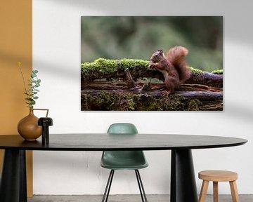 Eichhörnchen. Was für ein Bonbon von Anjella Buckens