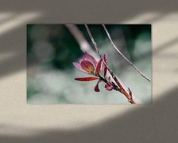 Belle fleur rose attractive avec des macrolens photographiés sur Jennifer Petterson