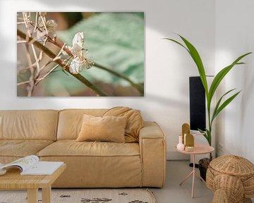 Belle photo macro nature de pétales de couleur neutre par une belle journée de printemps sur Jennifer Petterson