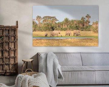 Gruppe von Elefanten, die am Rande eines Sumpfes in Kenia spazieren von Nature in Stock