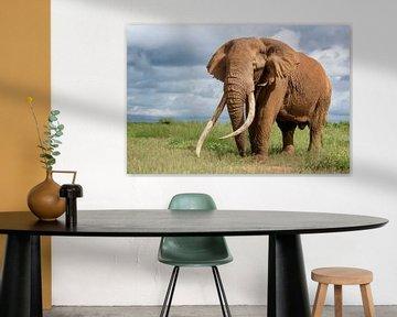 Portret van Tim de Tusker, een geliefde Afrikaanse olifant in Amboseli Nationaal Park in Kenia van Nature in Stock