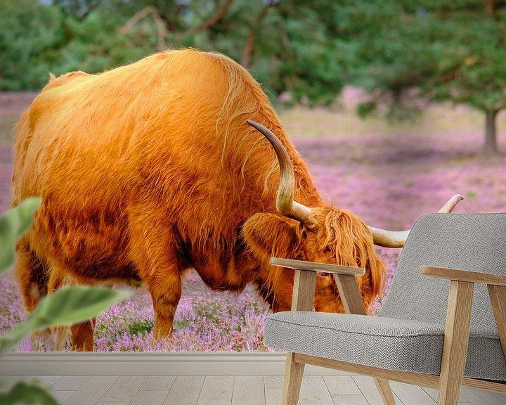 Sfeerimpressie behang: Schotse Hooglanders in een bloeiend heideveld van Sjoerd van der Wal