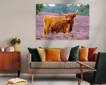 Schotse Hooglander met kalf in een bloeiend heideveld van Sjoerd van der Wal
