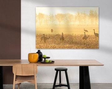 Kraanvogels tijdens een vroege herfstzonsopgang van Sjoerd van der Wal