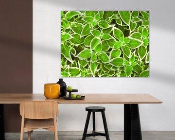 Grüne Blätter von Caroline Lichthart
