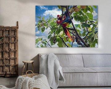 Twee papegaaien in het regenwoud van Costa Rica van Tilo Grellmann | Photography