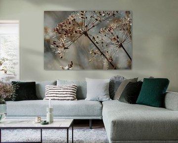 Schöne Blüten sind nicht hässlich...  Wilde Karotte in grauer Umgebung von KB Design & Photography (Karen Brouwer)