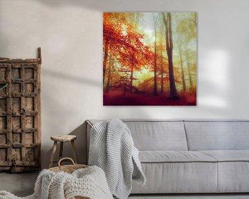 Une forêt d'automne de rêve sur Dirk Wüstenhagen