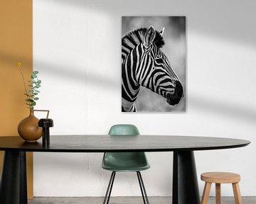 Zebra Schwarz/Weiß von Francois du Plessis