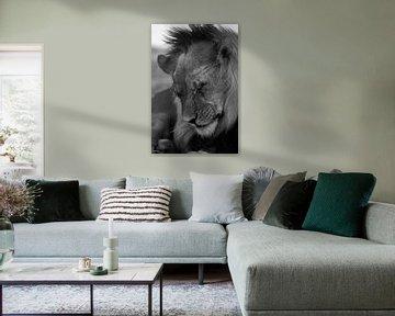 Löwe Mann Schwarz/Weiß von Francois du Plessis