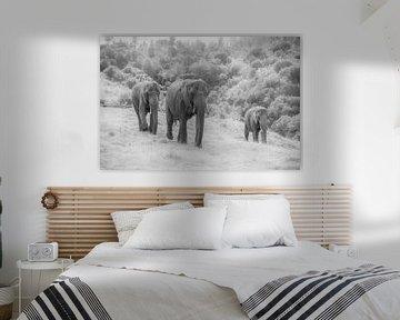 Trio von Elefanten s/w von Roelinda Tip