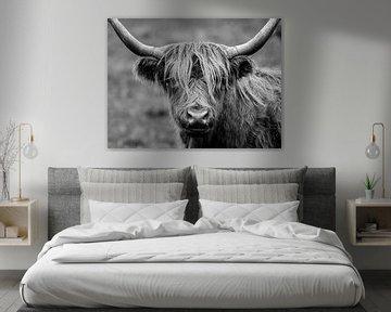 Schotse Hooglander in zwart/wit van Bouke Lolkema