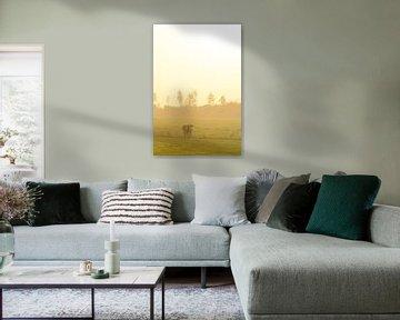 Koe in een wei tijdens een mistige zonsopgang van Sjoerd van der Wal