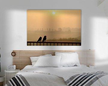 Paar kauwtjes op een reling kijken naar de zonsopkomst van Sjoerd van der Wal