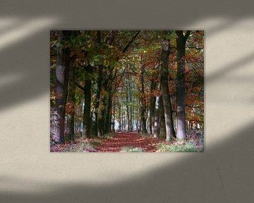 Doorkijk door bos