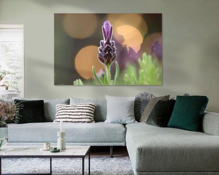 Beispiel: Lavendel von Fotografie Sybrandy