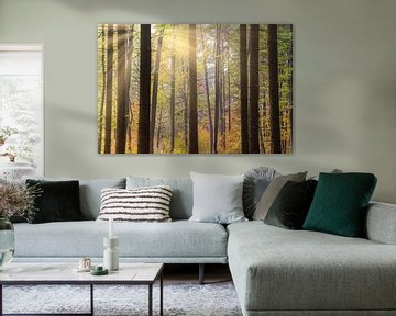Lichter im Wald von Tobias Luxberg
