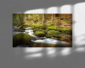 Charmante beek in het bos van Tobias Luxberg