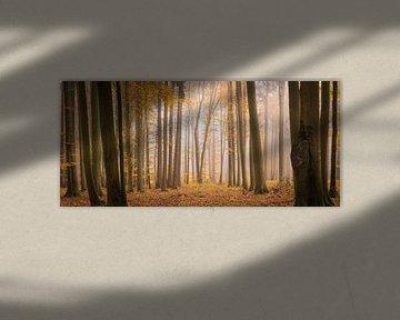 Lichtung im alten Wald von Tobias Luxberg