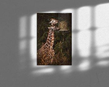 Zwei Giraffen fressen Heu von Suzanne Schoepe