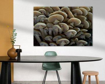 Een stam vol met paddenstoelen