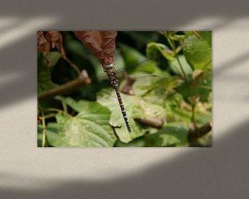 Libelle op een blad 1 von Toekie -Art