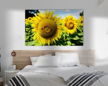 Sonnenblumenfeld mit fleissigem Bienchen von Frank Herrmann