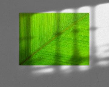 Groen palm blad  van Tessa Louwerens