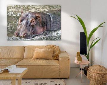 Happy Hippo von Angelika Stern