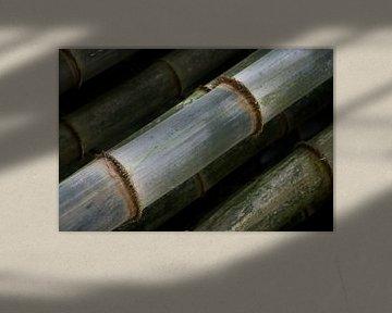 Bamboe stengels patroon von Tessa Louwerens